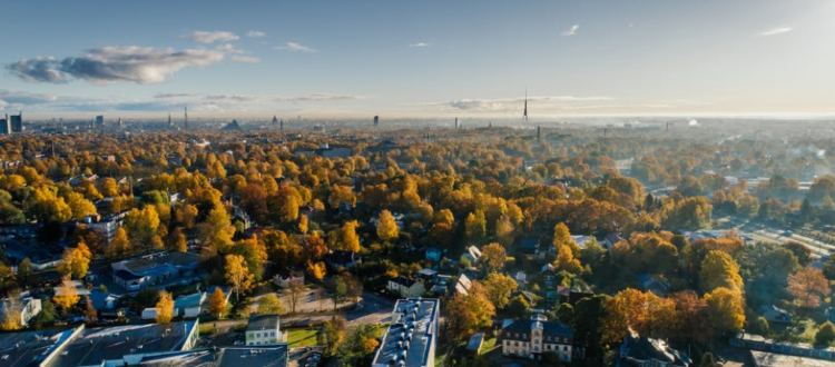 Aerial photo of city properties and trees